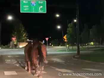 No animals, motorists injured in high-speed horse pursuit on I-70 - Aspen Times