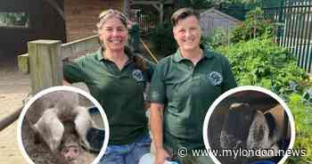 'Being with animals has healed me': Volunteers' mental health saved by city farm - My London
