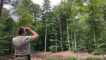 """Wald als """"Seismograf des Klimawandels"""""""