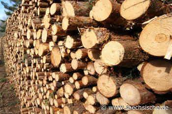 Hoyerswerda: Ein Hektar Wald in Lauta muss fallen - Sächsische.de