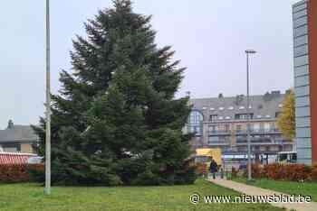 Stadbestuur zoekt (nu al) kerstbomen