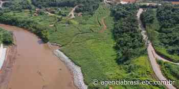 Reflorestamento em Brumadinho usa técnicas inéditas, mas só atingiu 1% - Agência Brasil