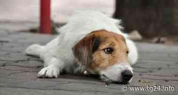 Fiuggi – Maltrattamenti sugli animali trentenne sotto processo - TG24.info