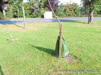 Täter knicken Bäume ab