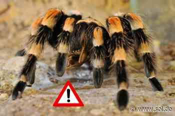 Aktuelle Warnung vor Vogelspinnen und Schlangen in Gemeinde Schiffweiler - sol.de