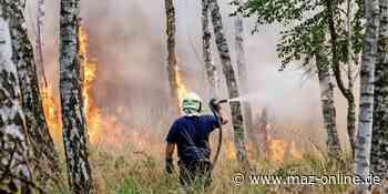 Waldbrandgefahr in Brandenburg steigt - Märkische Allgemeine Zeitung