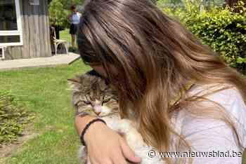 """Dierenthuisje herenigt lang verdwenen katten met baasjes: """"Snotteren van geluk"""""""