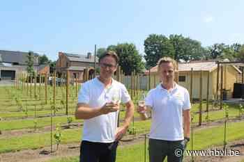 Tegen 2024 ook Zonhovense wijn (Zonhoven) - Het Belang van Limburg Mobile - Het Belang van Limburg