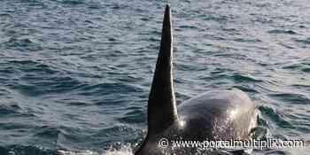 Orca surpreende marinheiros e acompanha lancha em Arraial do Cabo - Portal Multiplix