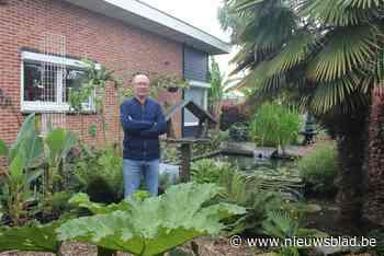 In de tuin van Jaak (55) vind je bananenplanten, palmbomen en tropische bloemen: welkom in de jungle van Temse