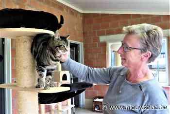 Vlaamse subsidies voor Wase kattenopvang
