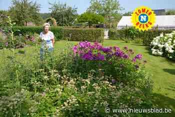 """Nicole maakte van haar weide een volwaardige tuin: """"Ik bezocht altijd tuinen in binnen- en buitenland, maar zelf had ik er nog geen"""""""