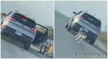 Buscan a segundo involucrado en abandono de husky en El Paso - Puente Libre La Noticia Digital