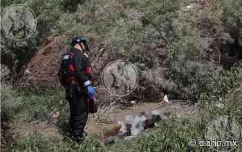 Galería: Bomberos de El Paso levantan cadáver de migrante - El Diario