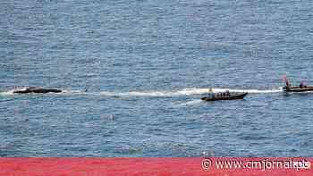 Cadáver de baleia gigante aparece na baía de São Martinho do Porto - Correio da Manhã