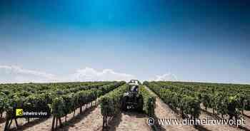 Adiada a decisão sobre produção de vinho do Porto à espera de resposta do Governo - Dinheiro Vivo