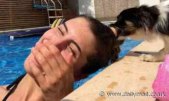 Panda the chihuahua grabs owner's ponytail in his teeth and tries to haul her out of swimming pool