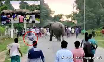 Boy is crushed to death by a rampaging elephant after being pushed to the ground in India