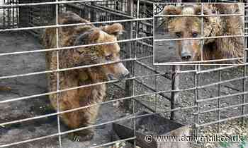 Blind bear has spent 30 years in a cage, claims charity looking to free him