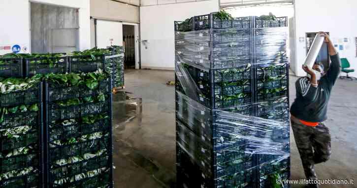 Agricoltura, dalla Ue procedura d'infrazione per l'Italia: ritardo nel recepimento della direttiva contro 16 pratiche commerciali sleali