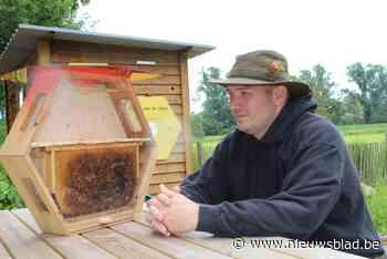 """De Boerderbij verliest 15.000 bijen in demonstratiekast: """"Wellicht heeft iemand gif gespoten"""""""