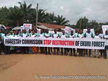 Ekuri Community stages protest, accuses Cross River Govt of illegal logging - National Accord