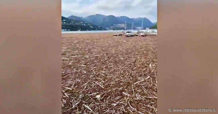 Maltempo, il lago di Como ricoperto dai detriti dopo le esondazioni: le immagini sono impressionanti