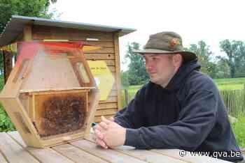 """De Boerderbij verliest 15.000 bijen in demonstratiekast: """"We... - Gazet van Antwerpen Mobile - Gazet van Antwerpen"""