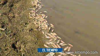 Mortandad de peces en la Ciénaga Santiago Apóstol de Sucre - El Tiempo