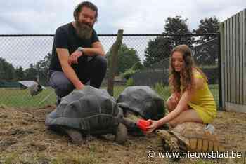 """Christophe en Flo hebben vijftig landschildpadden in hun tuin: """"In de winter kruipen ze op onze schoot"""" - Het Nieuwsblad"""