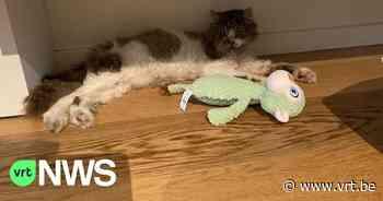 """Het Dierenthuisje in Geel bezorgt na 1,5 jaar kat terug aan baasjes: """"We stonden hier allemaal te wenen"""" - VRT NWS"""