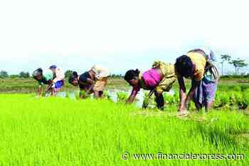 Kharif sowing picking up, early to gauge impact of stalled monsoon: Tomar