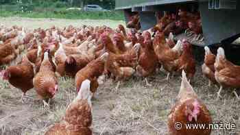 Direktverkauf von Eiern, Nudeln etc. in Lingen-Altenlingen - NOZ