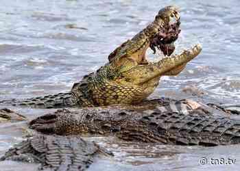 Adolescente es atacada por un cocodrilo en el Pacífico mexicano - TN8 Nicaragua