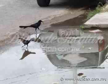 Continúa una fuga de agua en calles del centro de Mérida - El Diario de Yucatán