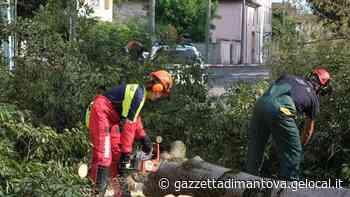 Due alberi cadono in centro a Viadana, lunghi disagi al traffico - La Gazzetta di Mantova
