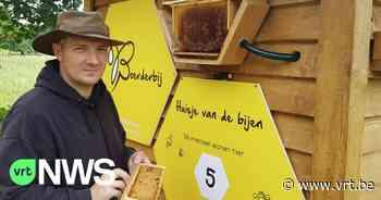"""15.000 dode bijen teruggevonden in bijenkast Meerhout: """"Waarschijnlijk vergiftigd door vandalen"""" - VRT NWS"""