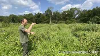 Dans la forêt de Nieppe, 87 000 arbres plantés en six mois, du jamais vu ! - La Voix du Nord
