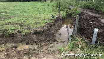Nieppe : des vaches et des fossés pour tenter de dissuader les gens du voyage - La Voix du Nord