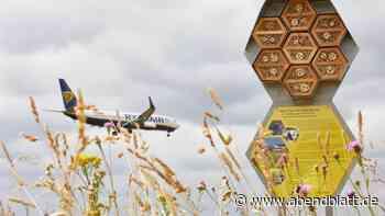 Tiere: Fleißige Bienen am Airport: Flughafen-Honig ist geerntet