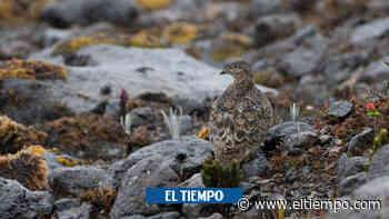 Descubren la que podría ser una nueva especie de ave en Colombia - ElTiempo.com
