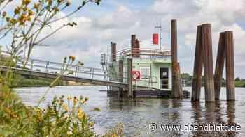 Wasser: Hilfe von Flöhen: Wassergüte-Messstation wiedereröffnet