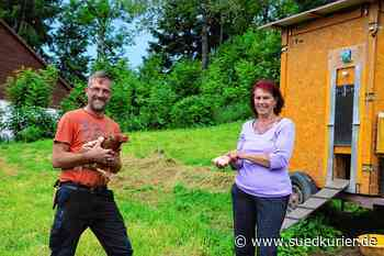 Bonndorf: Hühnerhaltung als Hobby: Ralf Albert und Lydia Güntert halten und züchten Hühner - SÜDKURIER Online