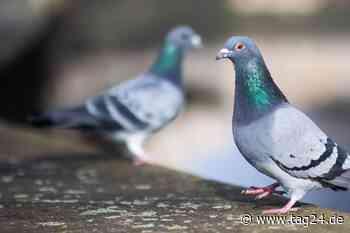 Unfall mit Taube im Kreis Wesel: Motorradfahrer kollidiert mit Vogel und verletzt sich schwer - TAG24