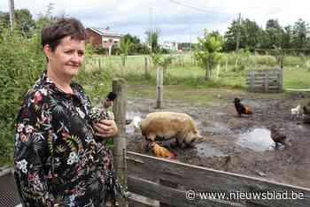 Gezin krijgt vier keer bezoek van kippendief