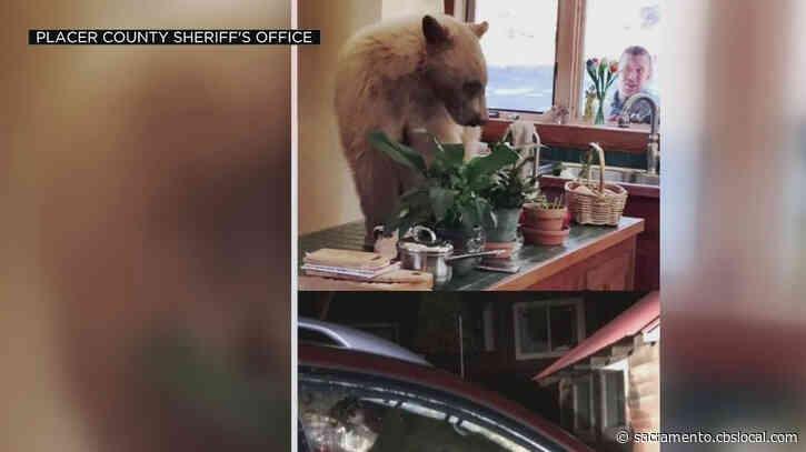 4 Bear Break-Ins Reported In 2 Days In Lake Tahoe
