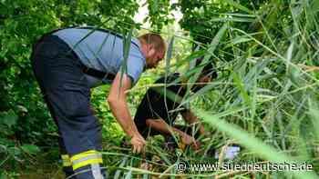 Feuerwehr stellt Kästen für entwischte Würgeschlange auf - Süddeutsche Zeitung
