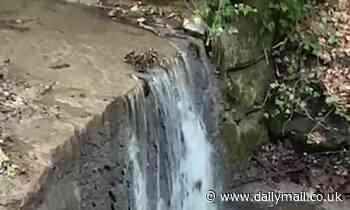 Moment mother duck and her ducklings traverse a waterfall in Romania as shocked onlookers gasp
