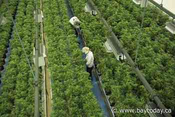 Seth Rogen's cannabis company Houseplant and Canopy Growth announce partnership end