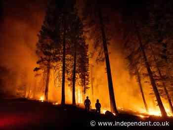 Pentagon may allow lifesaving wildfire-tracking system to expire, report says